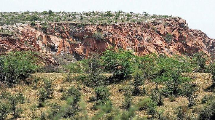 Aravali Forest
