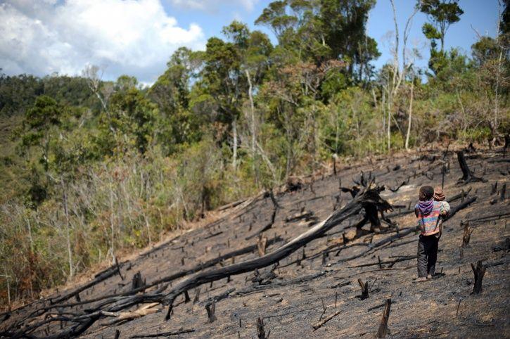 Deforestation Canada