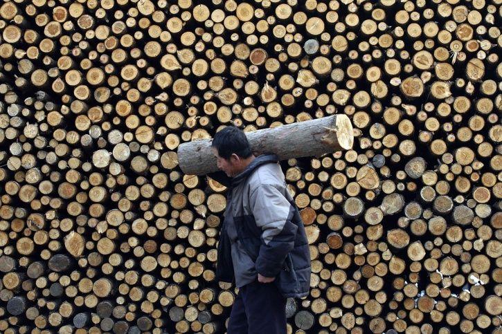 deforestation China
