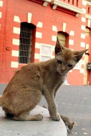 Raj Bhavan Karnataka Vajubhai Vala BBMP cat menace private contractor Bengaluru