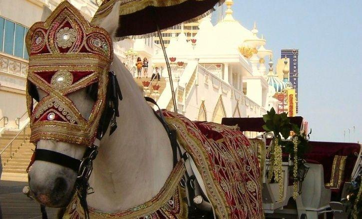 Horse Used In Dalit Wedding Dies After Stone Pelting During Marriage Procession In Gujarat