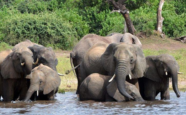 1st elephant memorial india