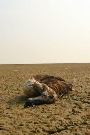 A Total Of 17000 Migratory Birds Have Died So Far In Rajasthans Sambhar Lake Due To Botulism