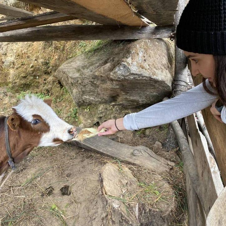 Anushka Sharma feeds a calf in Bhutan on Virat Kohli