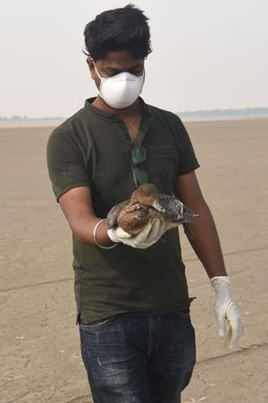 Dead Birds Found In Sambhar Lake Nawa Belt
