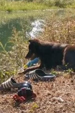 dog thailand Owner Dies In Lake Belongings
