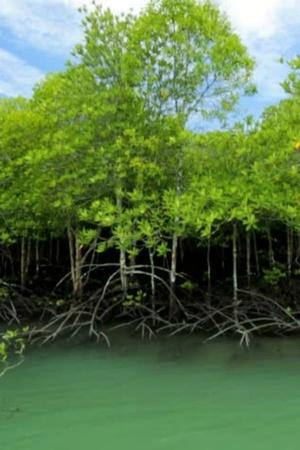 Mangroves Made Cyclone Bulbul Less Devastating This Is Why We Must Save Them