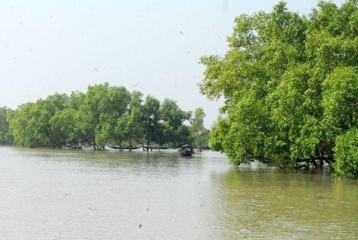 Mangroves Made Cyclone Bulbul Less Devastating & This Is Why We Must Save Them