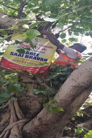 posters traffic cop save trees