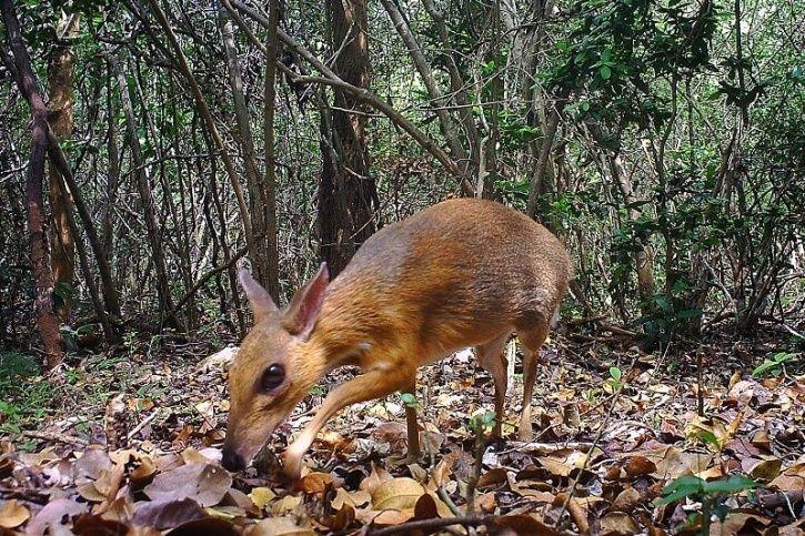 Rare Deer