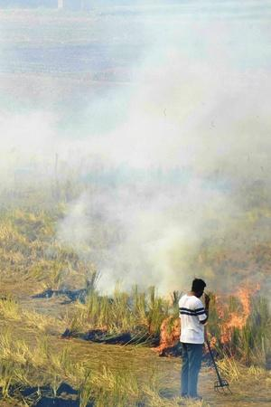 Stubble Burning Caused 44 Of Delhis Air Pollution While Politicians Were Busy In Blamegame