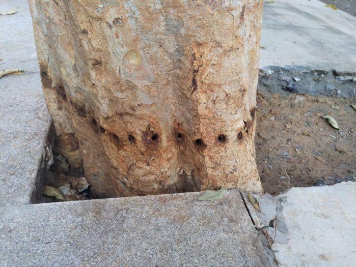 Tree Poisoning