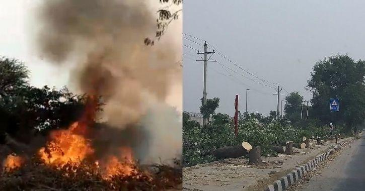 While Delhites Grasp For Clean Air, Trees Are Cut & Massive Fire Has Been Raging In Dwarka For Days