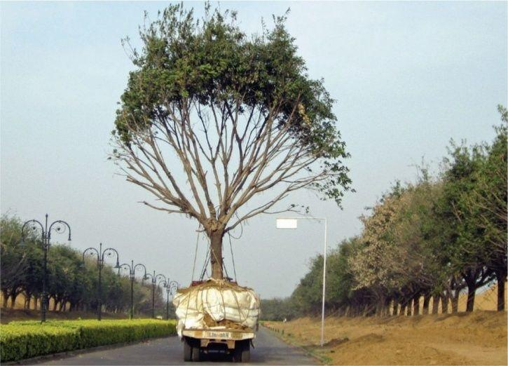 5,700 Mature Trees Won't Be Cut, Instead Transplanted Elsewhere To Build Dwarka Expressway