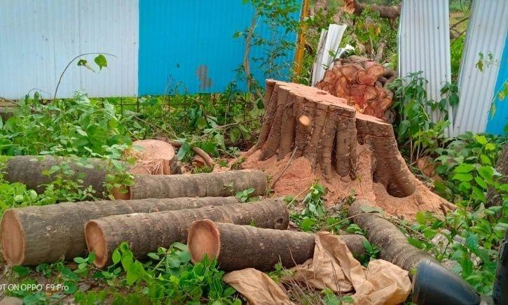 800 Of 1,800 Trees Transplanted From Aarey Forest By Mumbai Metro Are Dead