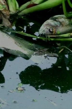 dead fish found
