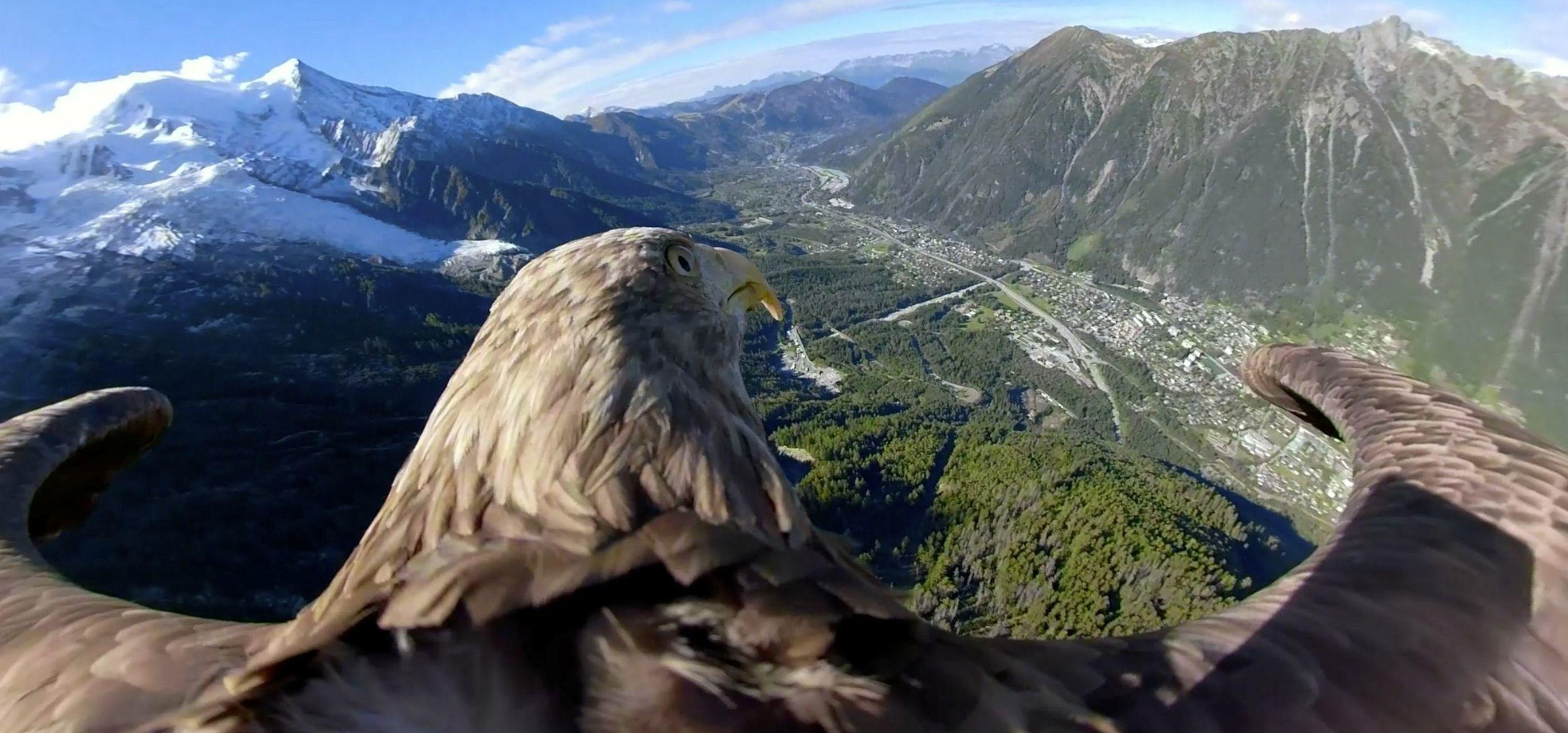 Eagle Equipped With A 360 Camera Took Flights Over Glaciers