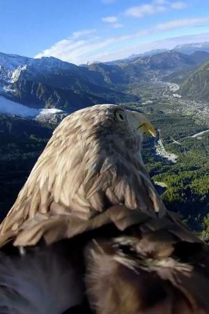 eagle eye 360 camera eagle victor glaciers mountain glaciers melting Global warming