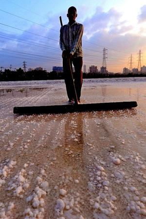 Ecologically Crucial Salt Pans That Protect Mumbai From Floods To Be Opened Up For Development