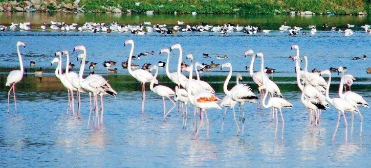 Migratory Birds From Serbia, Europe, That Flock Delhi Sanctuaries, Missing Due To Severe Pollution
