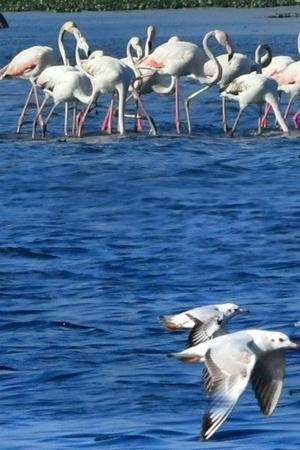 Migratory Birds From Serbia Europe That Flock Delhi Sanctuaries Missing Due To Severe Pollution
