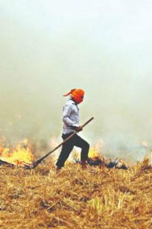 NASA Images Reveal Stubble Burning Behind Increase In Air Pollution Thick Smog In Delhi