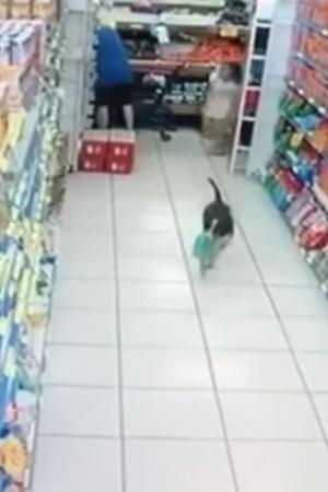 robber dog