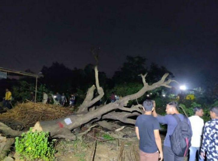 Save Aarey Forest