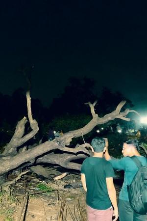 SC Stays Felling Of Aarey Trees Muslim Couple Thrashed In Alwar More Top News