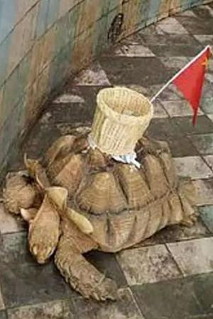 Shame Chinese Zoo Glues Basket On Tortoises Back For Tourists To Throw Money In It