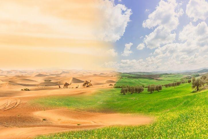 thar desert