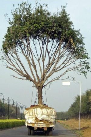 trees transplantation dwarka expressway trees forest gurgaon aarey forest save forests Nation