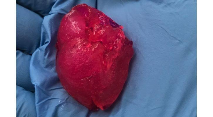 3D Printing Heart