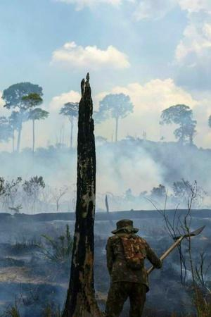 At 88 Meters The Tallest Tree In Amazon Is Still Safe From The Deadly Fires