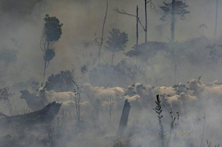 At 88 Meters, The Tallest Tree In Amazon Is Still Safe From The Deadly Fires