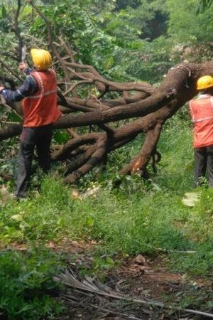 Construction Commercialisation Urbanisation Are Degrading Indias Forest SC Words Concerns
