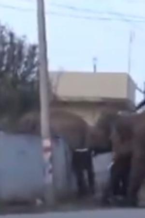elephant jump wall