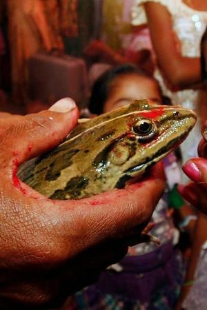 frog divorce