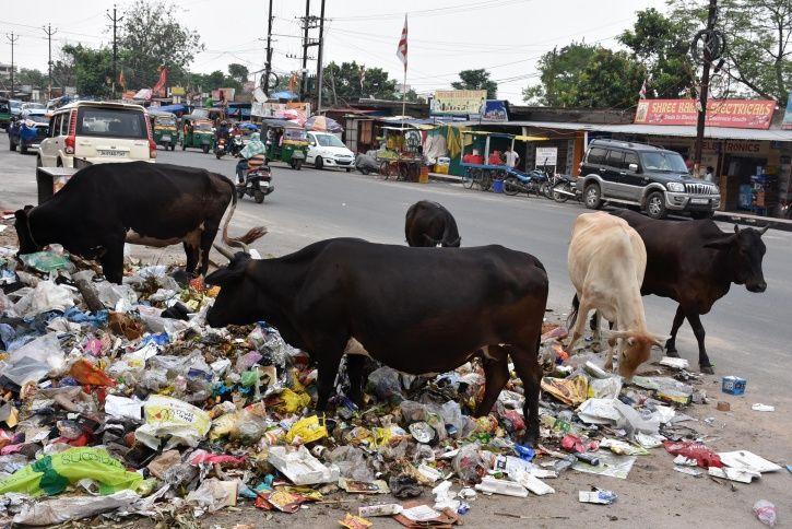 'Sex-Segregated Semen' For Cows To Ensure Birth Of Female Calves Is One Of Modi Govt's Plans