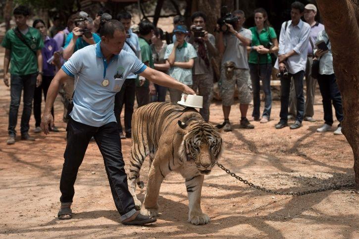Tiger Temple Thailand
