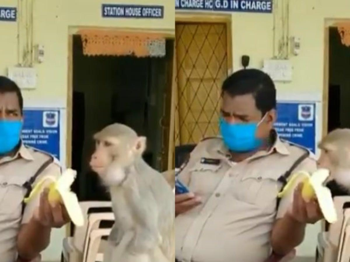 This Video Of A Police Officer Feeding Banana To An Amputee Monkey ...