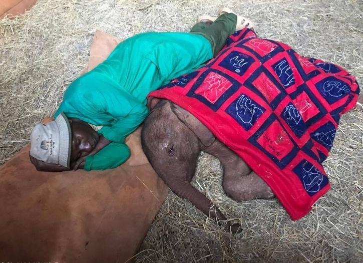 Keeper lying next to baby elephant