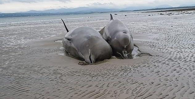 Whales on shore