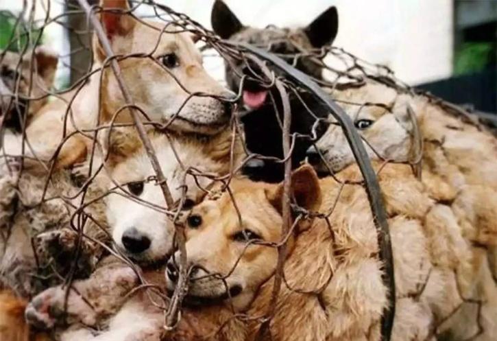 Animal Cruelty Act India