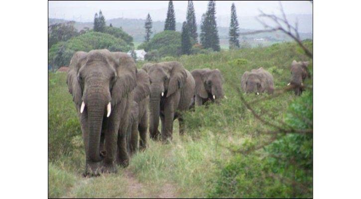 elephant whisperer