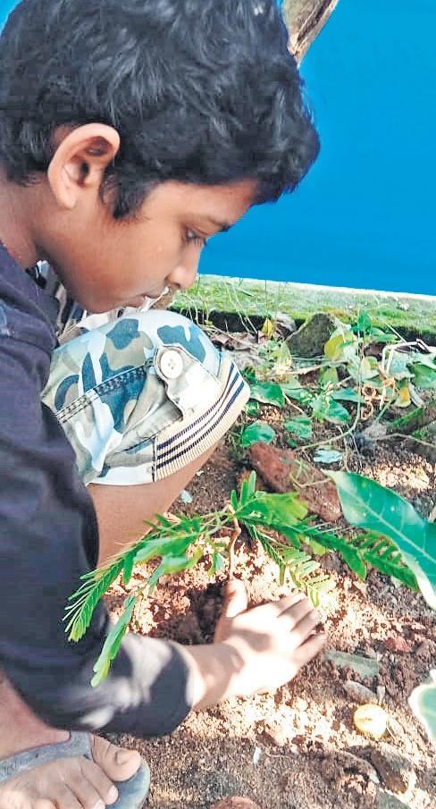 Pavan planting new sapling
