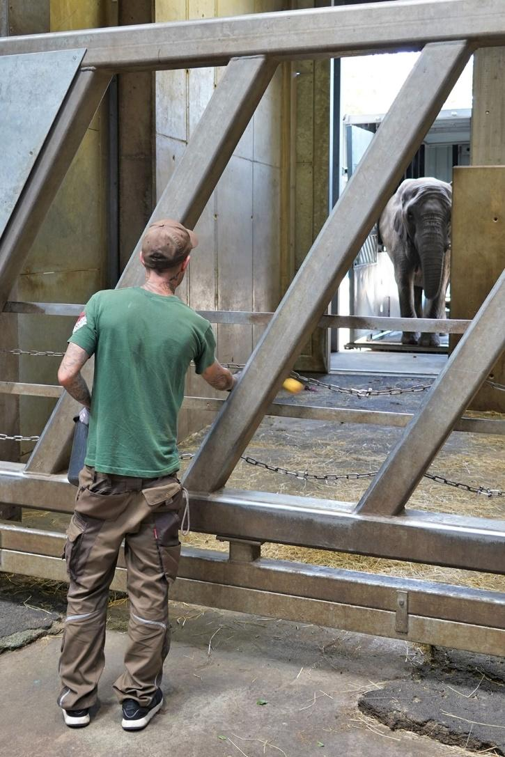 Elephant reunite after 12 years of being away