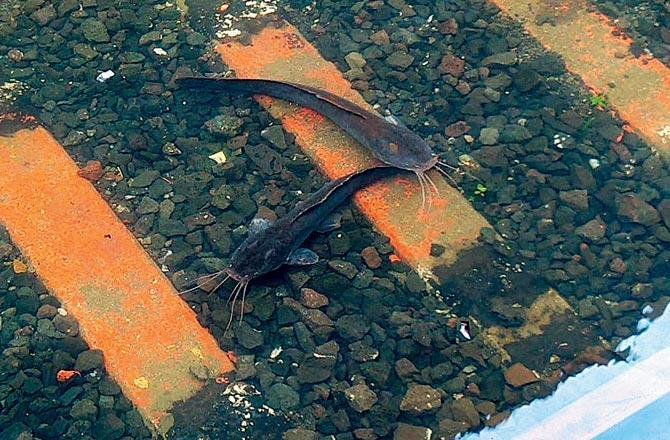 Fish Swimming At Railway Tracks