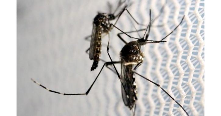 dengue singapore