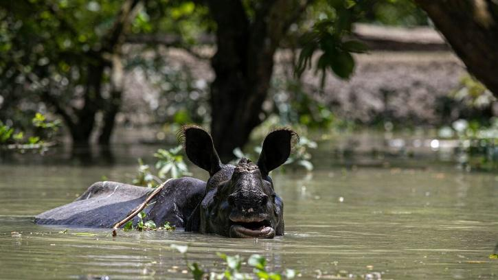 Assam Floods Kaziranga Park